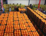 150 تن سیب و 220 تن پرتغال سهمیه تنظیم بازار نجف آباد توزیع خواهد شد