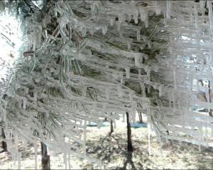 قندیلهای زیبای پارک فیروز  و خداحافظی آفتهای درختان
