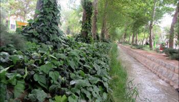 حس خوب گذری در پارک ملت (امیرآباد_منطقه پنج)